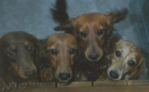 fourdogs
