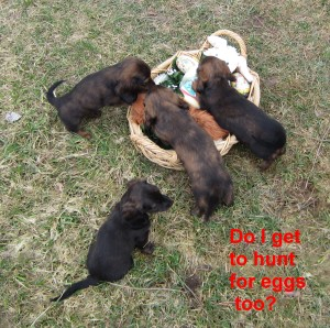 Call Maxine Lane at 406-531-7336 about these puppies.